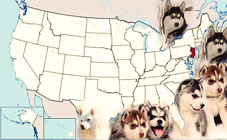 State to State Happy Puppy Owners