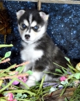 Una-Gives-Tons-Of-Puppy-Kisses-2247-Available