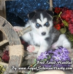 Available-Freya