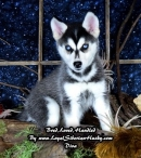 Diva-Available