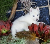 Northern-Available-2374
