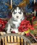 Orson-Full-Of Life-3499-Available