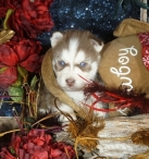 Rocco-Available